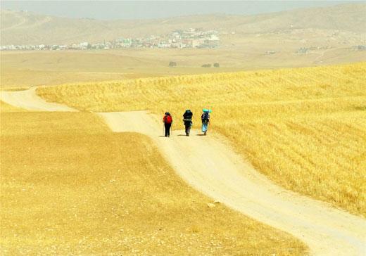 Trans israel path by shira madmon