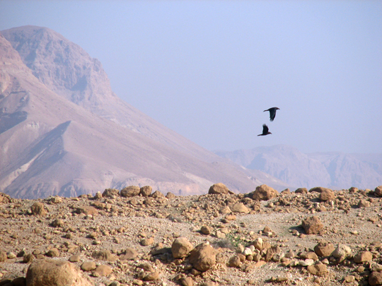 Coorindation in the desert by yifat