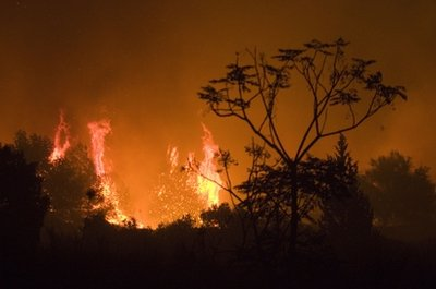 Israel forest fire mt carmel 1210