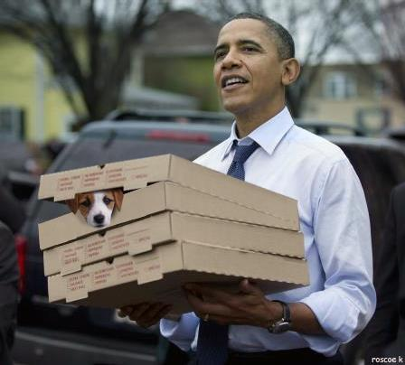 Pupperoni pizza