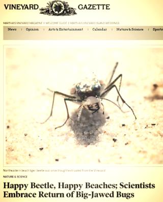 Marthas vineyard bugs