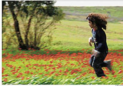 Haaretz_flowers