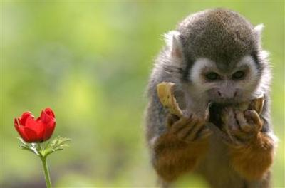 Monkey_near_tel_aviv